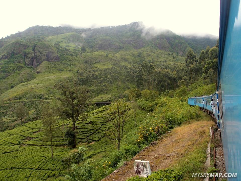 Train crossing tea plantations