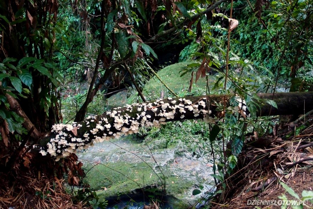 Reach Falls - lichens & mosses