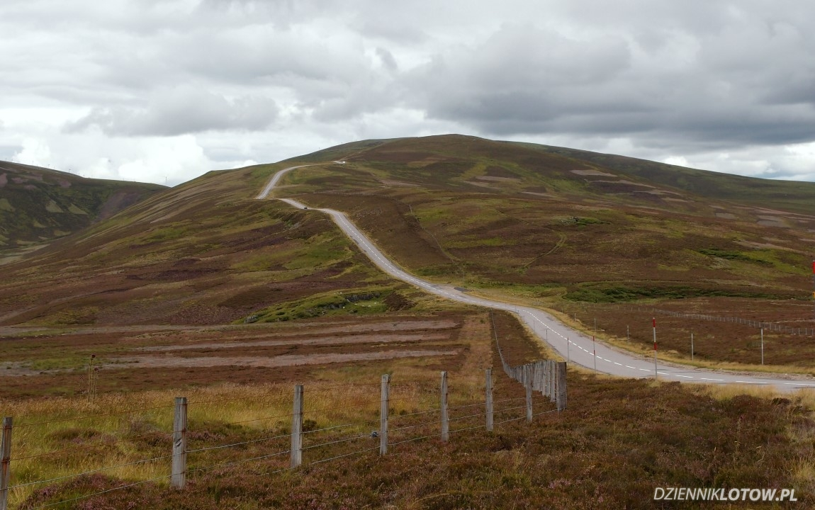 Heather fields in Cairngorms National Park